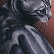 Cropped Cat 1 Art Print by Carol Wilson