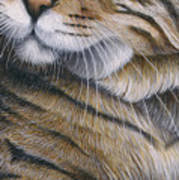 Cropped Cat 6 Art Print