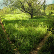 Crossing Paths Art Print