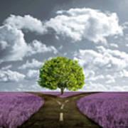 Crossroad In Lavender Meadow Art Print