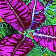 Croton - Purple Art Print