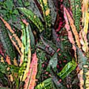Croton 3 Art Print