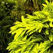 Croton Cascading Down The Hillside Art Print