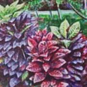 Crotons 1 Art Print