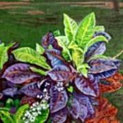 Crotons 2 Art Print