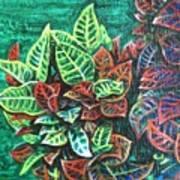 Crotons 3 Art Print