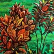 Crotons 5 Art Print