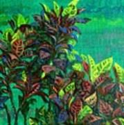 Crotons 7 Art Print
