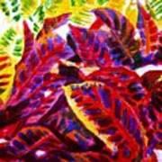 Crotons Sunlit 1 Art Print