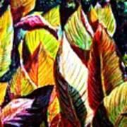 Crotons Sunlit 2 Art Print