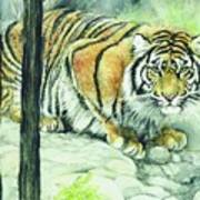Crouching Tiger Art Print