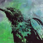 Crow II Art Print