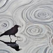 Crow In A Rain Puddle Art Print