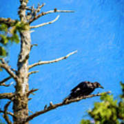 Crow In An Old Tree Art Print
