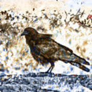 Crow On Blue Rocks Art Print