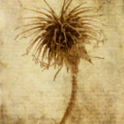 Crown Of Thorns Art Print