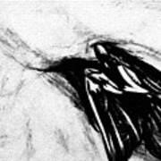 Crows  Fall Art Print