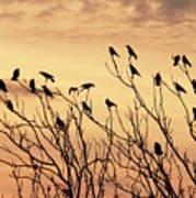 Crows In Their Twitter Cloud. Art Print