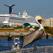 Cruising Pelican Art Print