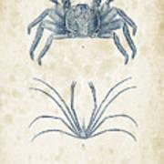 Crustaceans - 1825 - 14 Art Print