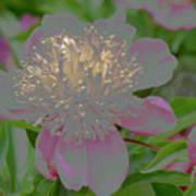 Crystalline Flower Art Print