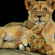 Cub Brothers Art Print