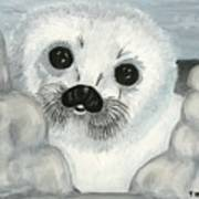 Curious Arctic Seal Pup Art Print