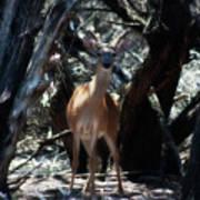 Curious Bambi Art Print