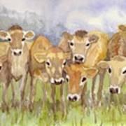 Curious Calves Art Print