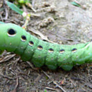 Curious Caterpillar Art Print