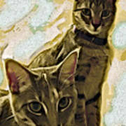 Curious Cats Print by David G Paul