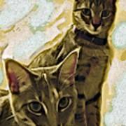 Curious Cats Print by David G Paul