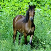 Curious Horse  Art Print