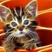 Curious Kitten Print by Pamela Johnson