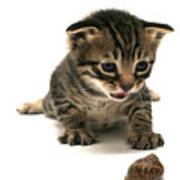 Curious  Kitten Art Print