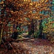 Curious Path In Autumn Art Print