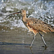 Curlew And Tides Art Print