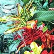 Curley Crotons Art Print