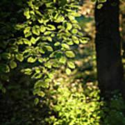 Curtain Of Leaves Art Print