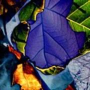 Curved Leaf Art Print