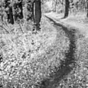 Curving Path Through Woods Art Print