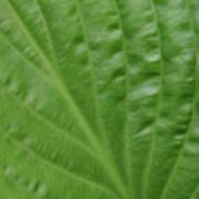 Curvy Leaf Lines Art Print