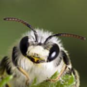 Cute Bee Art Print