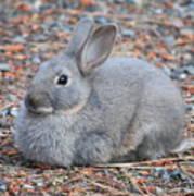 Cute Campground Rabbit Art Print