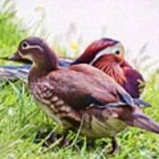 Cute Couple - Mandarin Ducks Art Print