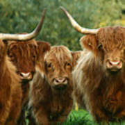 Cute Fluffy Cows Art Print