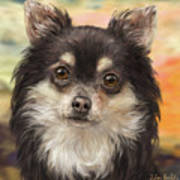 Cute Furry Brown And White Chihuahua On Orange Background Art Print