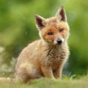 Cute Overload Series - Best Baby Fox Ever Art Print
