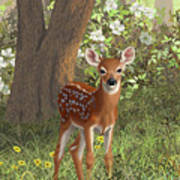 Cute Whitetail Fawn Print by Crista Forest