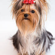 Cute Yorkie Puppy With Red Bow Art Print